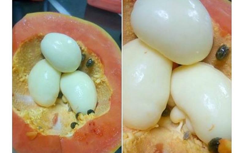 他切開木瓜看到裡面藏「好幾顆水煮蛋?」嚇到貼網詢問,專業網友解惑後真的長知識了!